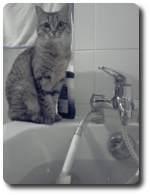 Gard'Ani Services - garde de votre chat en votre absence